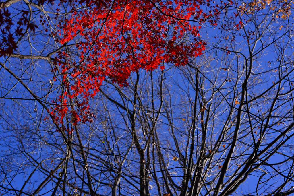 小石川植物園 紅葉撮影ワークショップ_f0050534_22343291.jpg