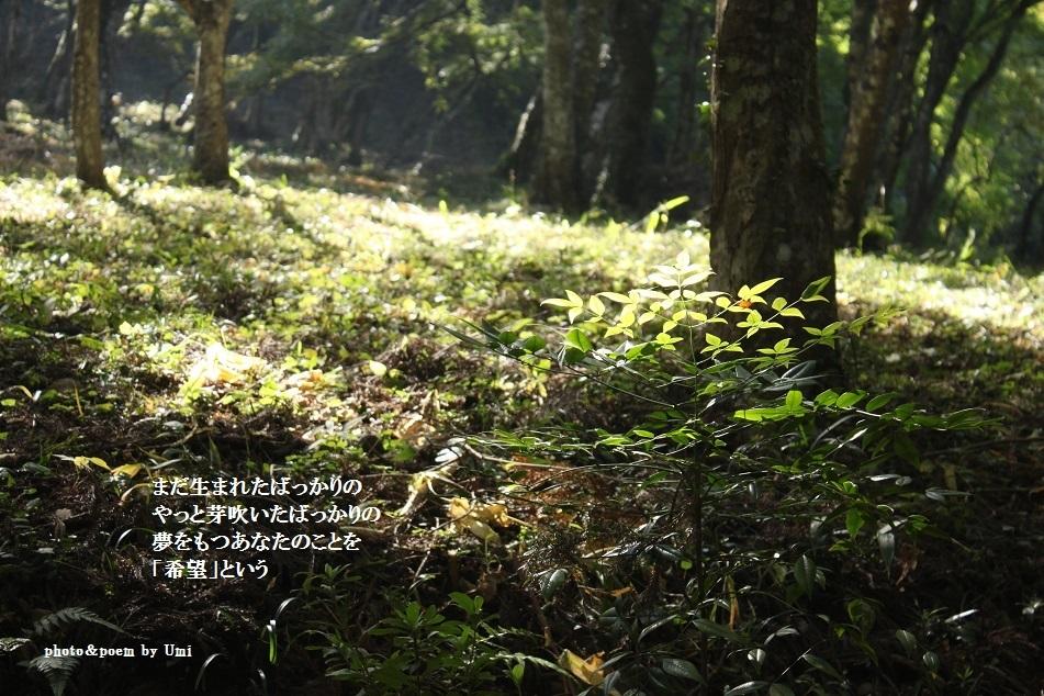 f0351844_16494648.jpg