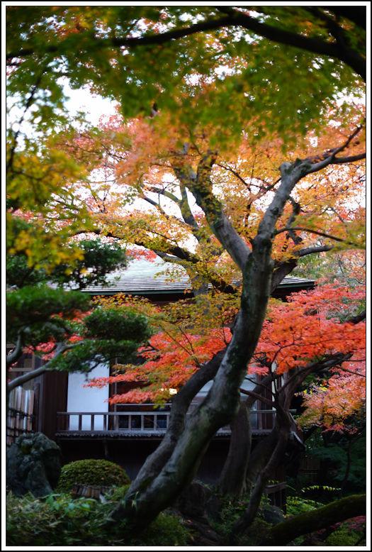 小石川後楽園 -21_b0340572_21004765.jpg