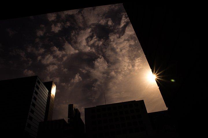 晩秋の美術館から空を見上げるヒカリトカゲ_d0353489_1230227.jpg
