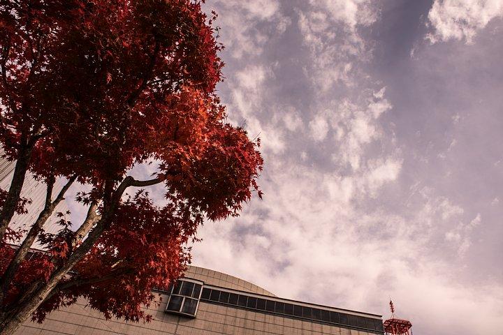 晩秋の美術館から空を見上げるヒカリトカゲ_d0353489_12304596.jpg