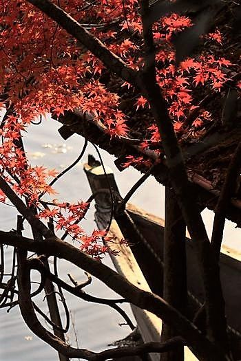 紅葉の世界遺産 龍安寺_c0134734_15552683.jpg