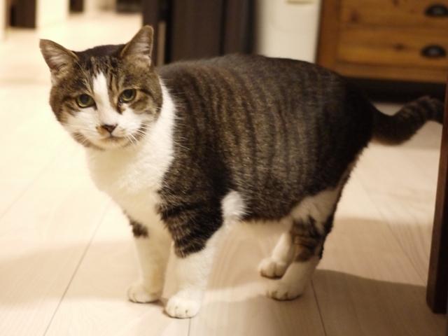猫のお留守番 姫ちゃん編。_a0143140_00351057.jpg