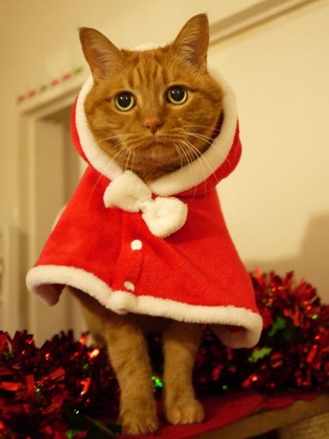 2018年12月2日ゆきねこクリスマスニャーティー開催ゆきねこ雑貨店開店時間のお知らせ。_a0143140_22521347.jpg