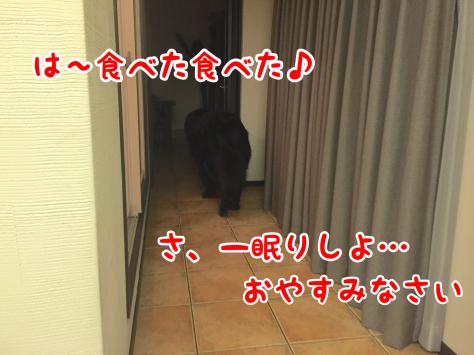 c0343364_15593009.jpg