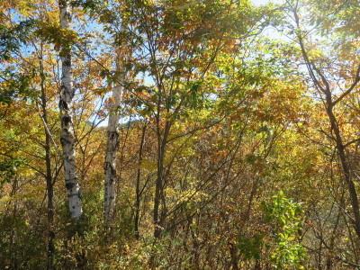 ≪ 山の秋を愉しむ ≫_a0357790_19380855.jpg