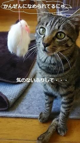 f0242002_23274436.jpg