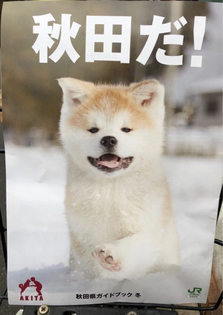 秋田だ!_f0144003_11020449.jpg