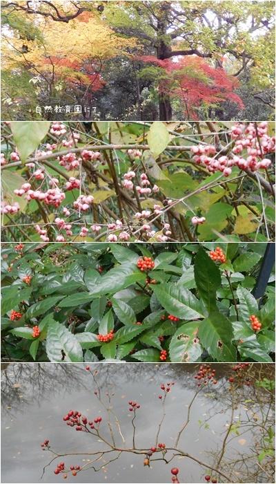 池田山界隈ウォーキング&お友達のコーラス_c0051105_22481996.jpg