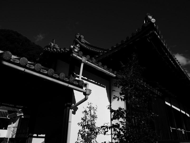 興聖寺 光と影_e0374932_13012153.jpg