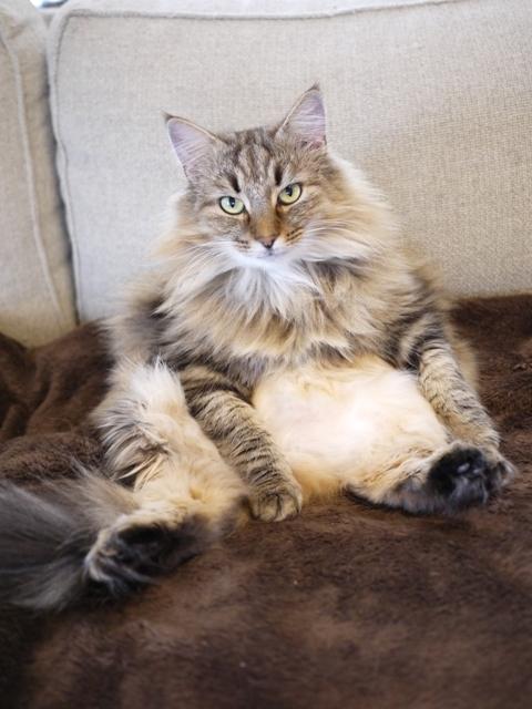 猫のお留守番 ベラトリックスちゃん編。_a0143140_20233008.jpg