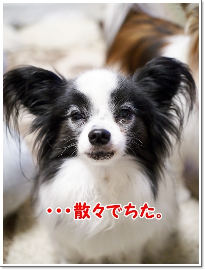 d0013149_00283688.jpg