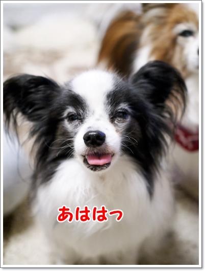 d0013149_00285308.jpg