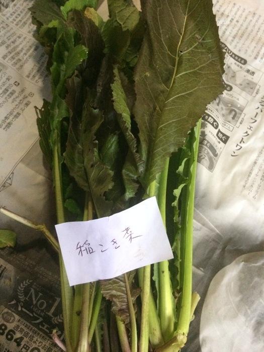 野菜のこと_b0057979_22093125.jpg