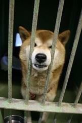 【犬・移動先募集】センター(支所)収容(12/9訪問)_f0242002_09025039.jpg