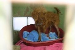 【犬・移動先募集】センター(支所)収容(12/9訪問)_f0242002_09092712.jpg