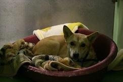 【犬・移動先募集】センター(支所)収容(12/16訪問)_f0242002_09093339.jpg