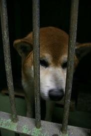 【犬・移動先募集】センター(支所)収容(12/9訪問)_f0242002_09095798.jpg
