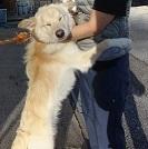 【犬・移動先募集】センター(支所)収容(12/9訪問)_f0242002_09100240.jpg