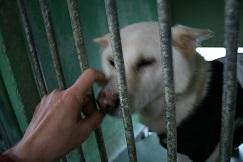 【犬・移動先募集】センター(支所)収容(12/9訪問)_f0242002_09101255.jpg