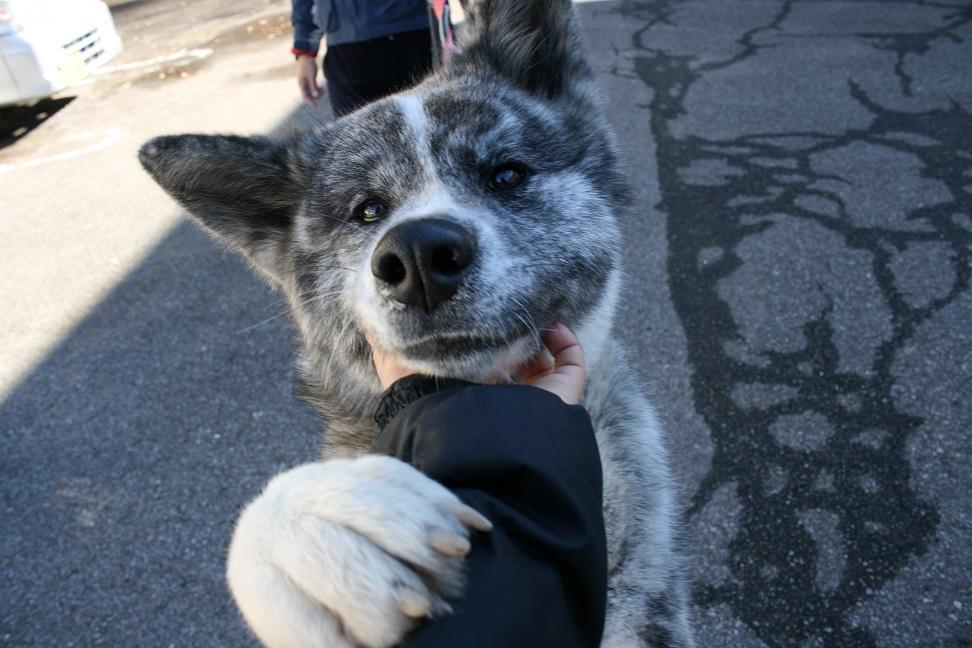 【犬・移動先募集】センター(支所)収容(12/9訪問)_f0242002_21000476.jpg