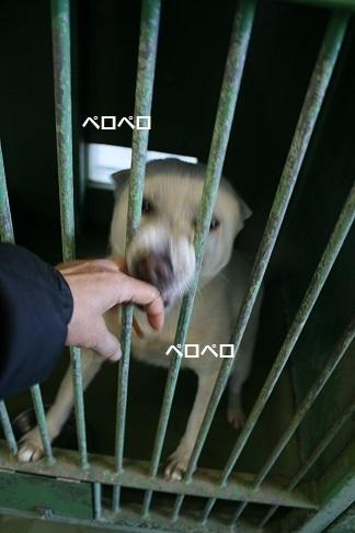 【犬・移動先募集】センター(支所)収容(12/9訪問)_f0242002_21003788.jpg