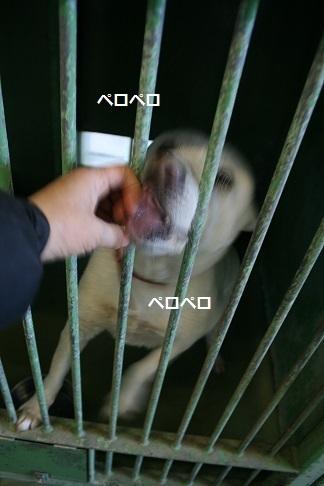 【犬・移動先募集】センター(支所)収容(12/9訪問)_f0242002_21010901.jpg