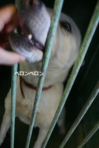 【犬・移動先募集】センター(支所)収容(12/9訪問)_f0242002_21192338.jpg
