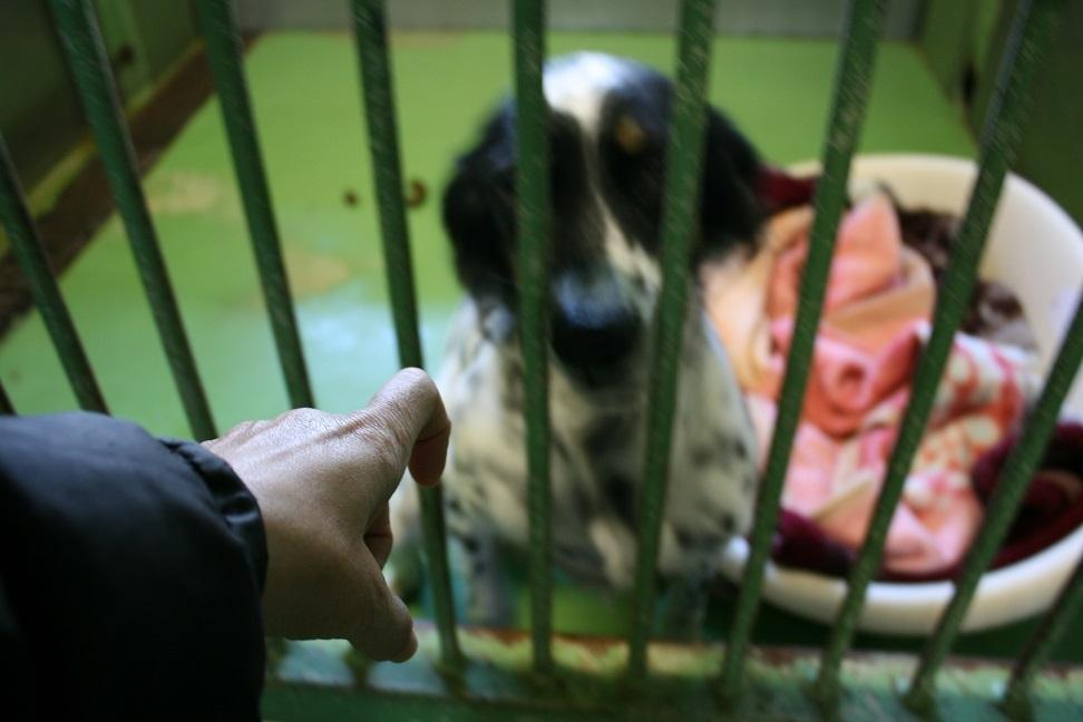 【犬・移動先募集】センター(支所)収容(12/9訪問)_f0242002_21212497.jpg