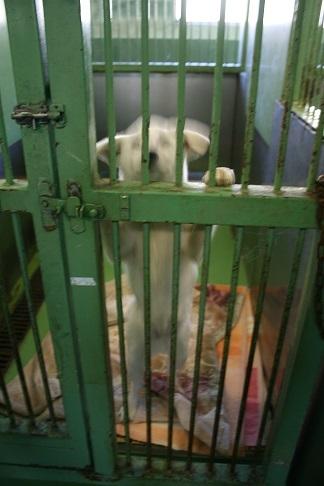 【犬・移動先募集】センター(支所)収容(12/9訪問)_f0242002_21213522.jpg