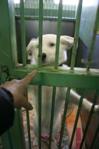 【犬・移動先募集】センター(支所)収容(12/16訪問)_f0242002_21214049.jpg