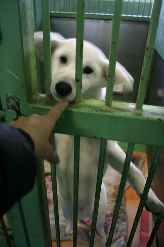 【犬・移動先募集】センター(支所)収容(12/9訪問)_f0242002_21214695.jpg