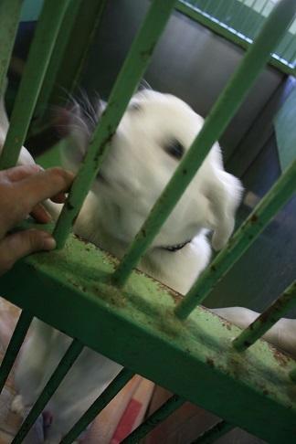 【犬・移動先募集】センター(支所)収容(12/9訪問)_f0242002_21215438.jpg