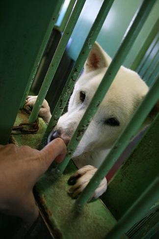 【犬・移動先募集】センター(支所)収容(12/16訪問)_f0242002_21220986.jpg