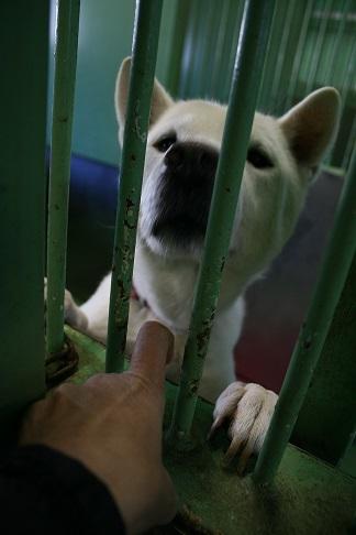 【犬・移動先募集】センター(支所)収容(12/16訪問)_f0242002_21221461.jpg