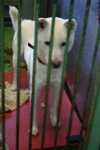 【犬・移動先募集】センター(支所)収容(12/9訪問)_f0242002_21222386.jpg