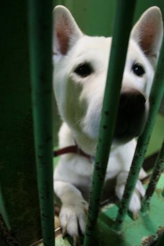 【犬・移動先募集】センター(支所)収容(12/16訪問)_f0242002_21255152.jpg