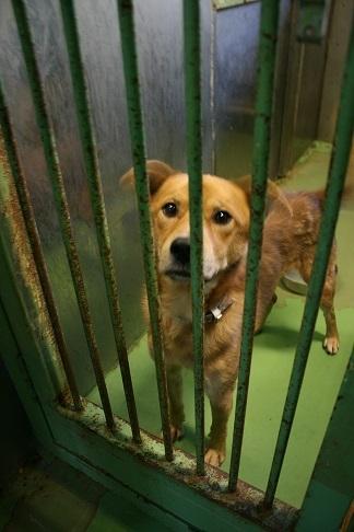 【犬・移動先募集】センター(支所)収容(12/16訪問)_f0242002_21272159.jpg