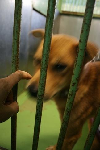 【犬・移動先募集】センター(支所)収容(12/9訪問)_f0242002_21272812.jpg
