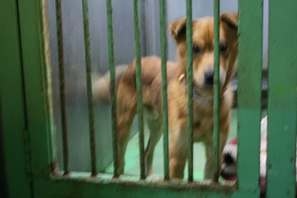 【犬・移動先募集】センター(支所)収容(12/9訪問)_f0242002_21274299.jpg