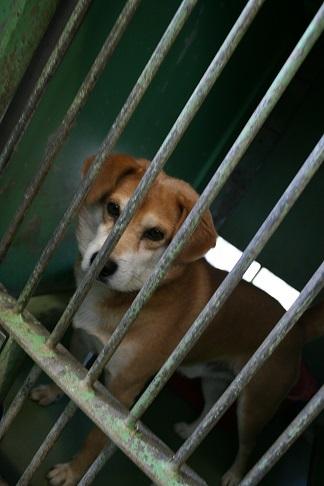 【犬・移動先募集】センター(支所)収容(12/16訪問)_f0242002_21305198.jpg