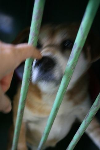 【犬・移動先募集】センター(支所)収容(12/9訪問)_f0242002_21311671.jpg