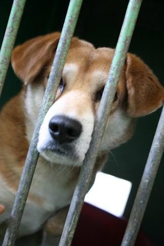 【犬・移動先募集】センター(支所)収容(12/16訪問)_f0242002_21312869.jpg