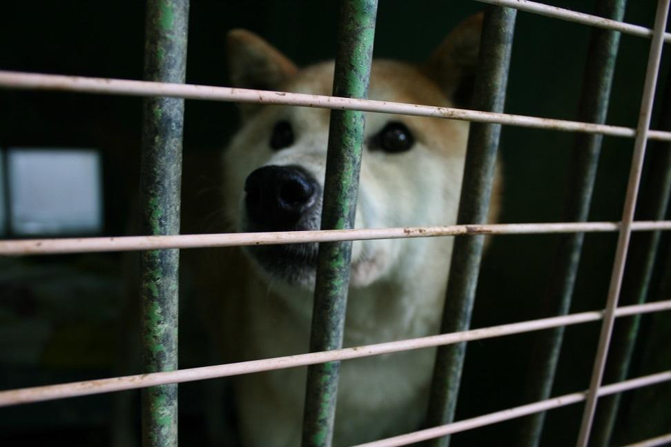 【犬・移動先募集】センター(支所)収容(12/9訪問)_f0242002_21314558.jpg