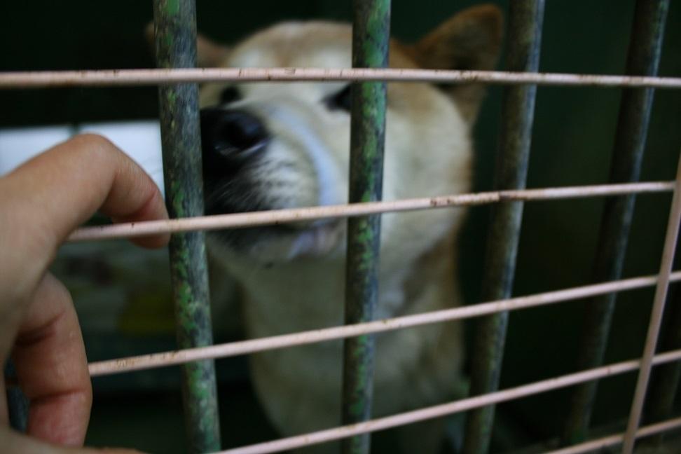【犬・移動先募集】センター(支所)収容(12/9訪問)_f0242002_21315384.jpg