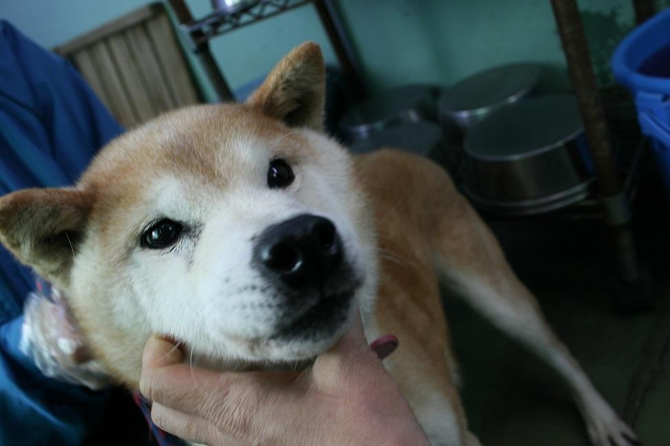 【犬・移動先募集】センター(支所)収容(12/16訪問)_f0242002_21320354.jpg