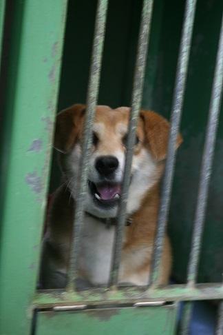 【犬・移動先募集】センター(支所)収容(12/16訪問)_f0242002_21321099.jpg