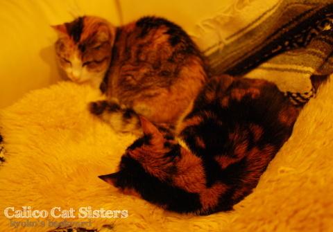 猫団子まであと1歩_b0253205_07421170.jpg