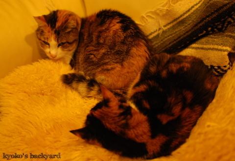 猫団子まであと1歩_b0253205_07422291.jpg