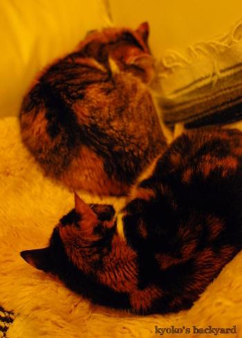 猫団子まであと1歩_b0253205_07424374.jpg
